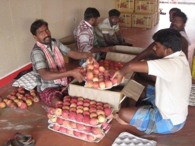 Obstmarkt_Chennai_1409-064